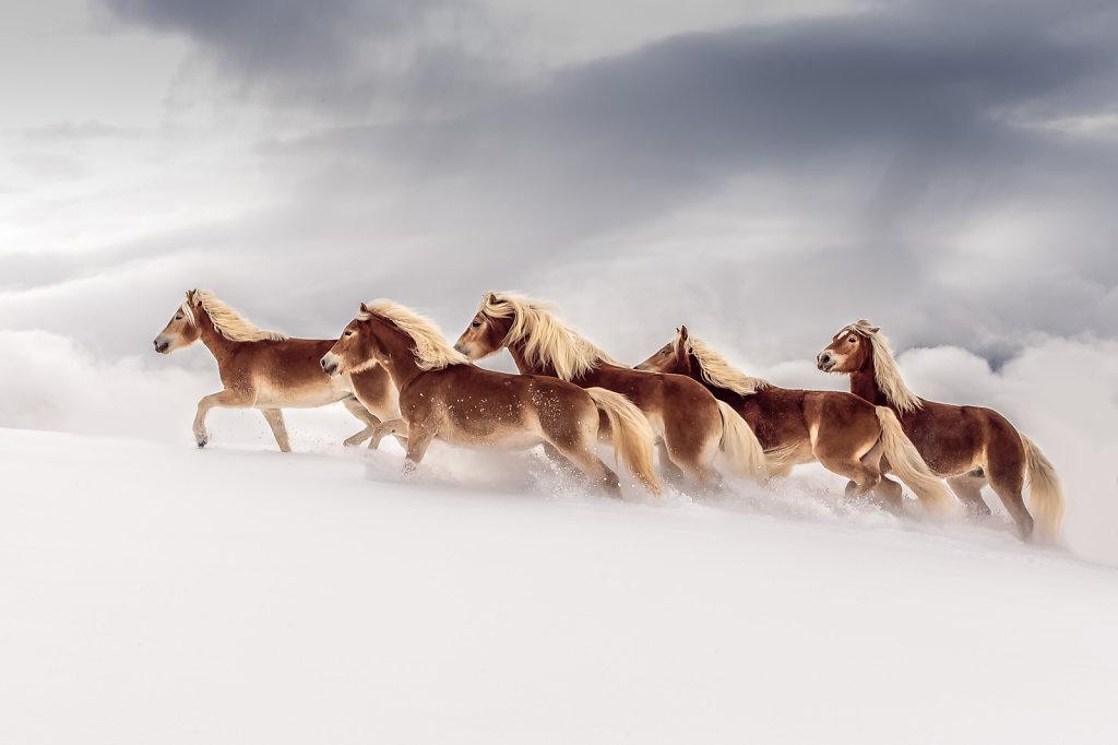haflinger-1-8.jpg